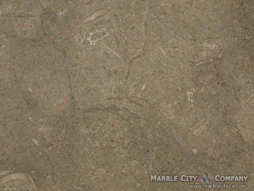 Fossil - Limestone Countertops Bay Area, California. Macro view — Macro View