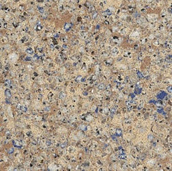 Blue Sahara - Silestone Quartz Countertops Bay Area, California. Slab view — Slab View